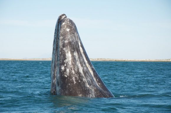 top places for whale watching in the united states