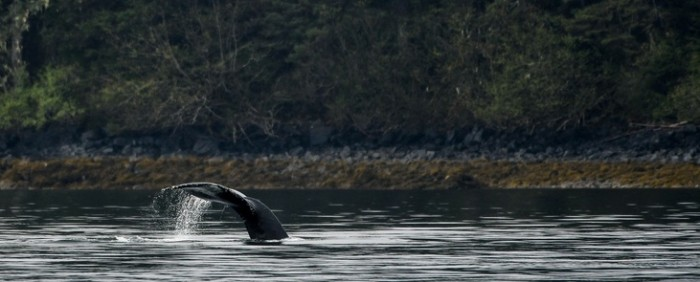 Make Your Alaskan Trip Unforgettable: A Whale's Song Expeditions