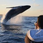 Go Whale-Watching With Fred. Olsen Cruise Lines and ORCA