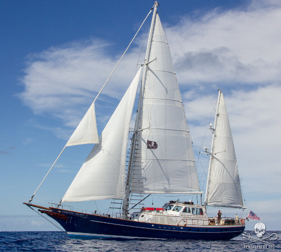 Volunteer to Sail and Serve with Sea Shepherd