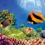 Coral Expeditions to Have New Cruises to Great Barrier Reef