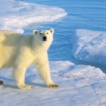 For the Nordic-at-Heart Cruise to the Poles with Ponant Cruise Line