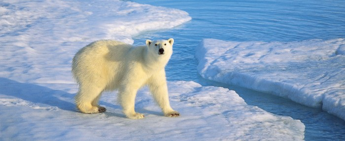 National Geographic Cruises to the Polar Regions