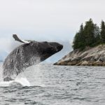 The Best Cruise Destinations for Viewing Wildlife